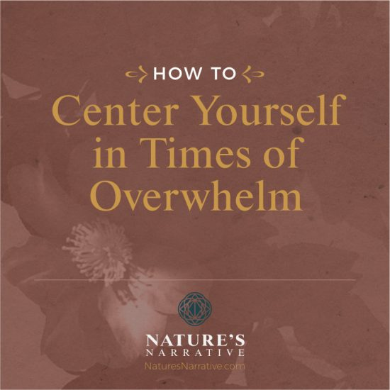 How to Center Yourself in Times of Overwhelm | Barbara Seie | Nature's Narrative