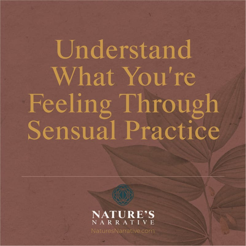 Understand What You're Feeling Through Sensual Practice which concerns me Barbara Seie Nature's Narrative